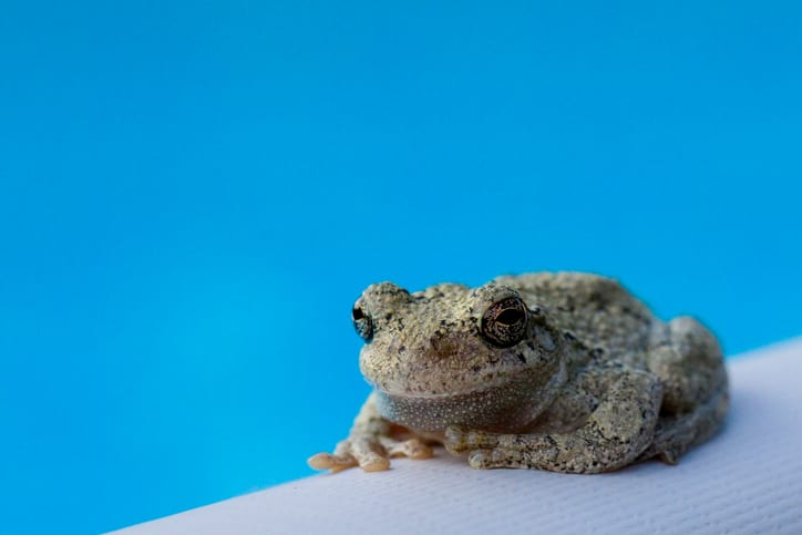 How to Save Critters from Drowning in Your Swimming Pool