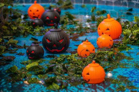 Group of orange and black Halloween jack o lantern Frederick, MD & Springfield, VA