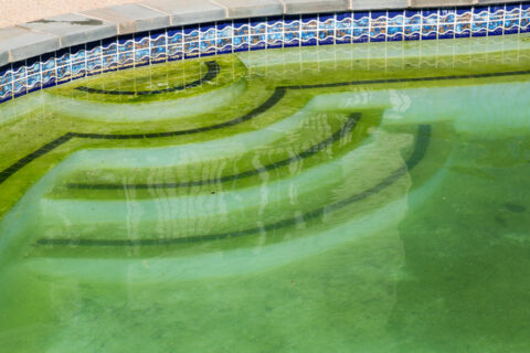 Detail of backyard pool with green water that needs cleaning Frederick, MD & Springfield, VA